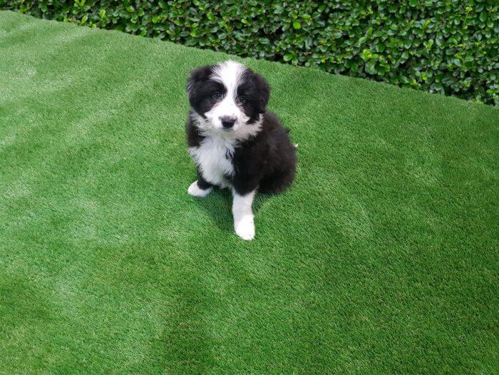 Albert Dog on Pet 28